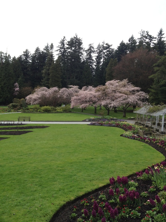 The rose gardens at Stanley Park.